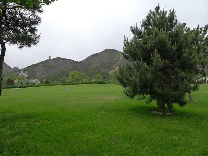 天寿陵园绿化