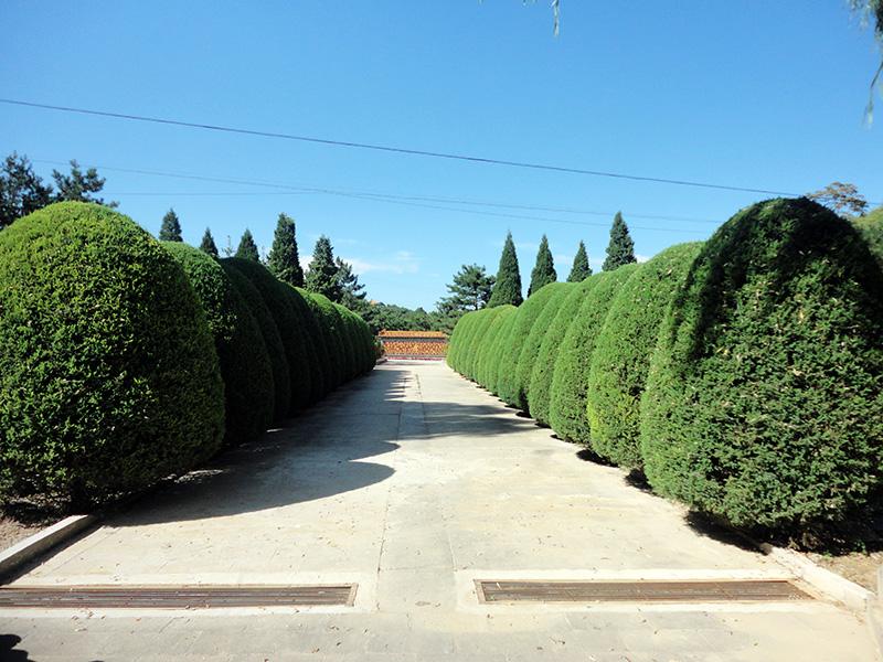7墓区景观