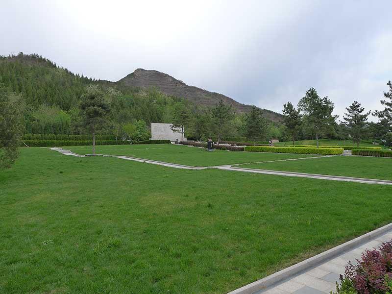 13天寿园草坪
