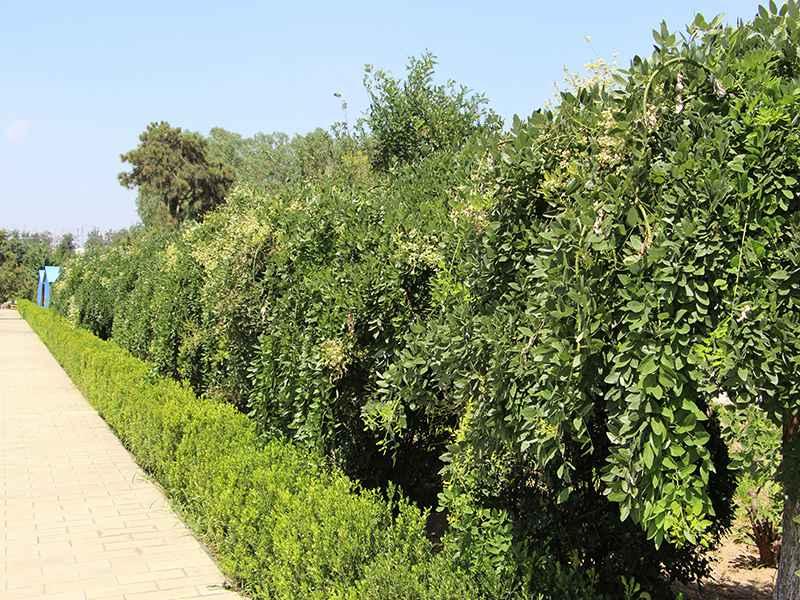 4陵园绿化
