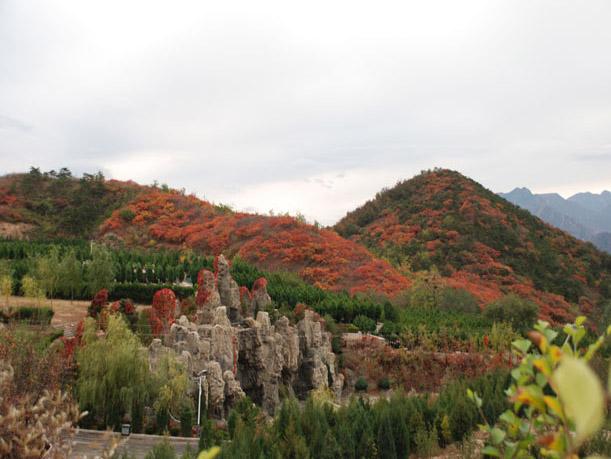 7陵园秋景