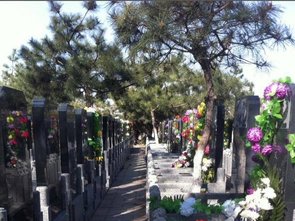 5墓区环境
